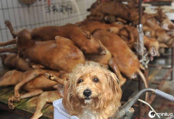 Resultado de imagem para carne de cachorro