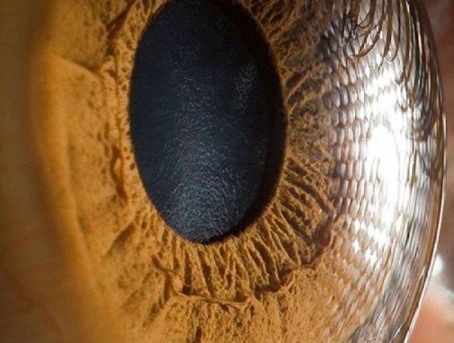 detalhe do olho