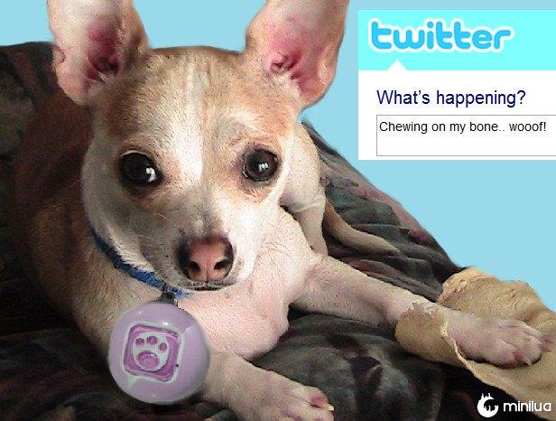 produtos do cão - Twitter cão