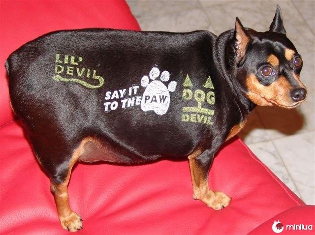 Produtos do cão - tatuagens cão