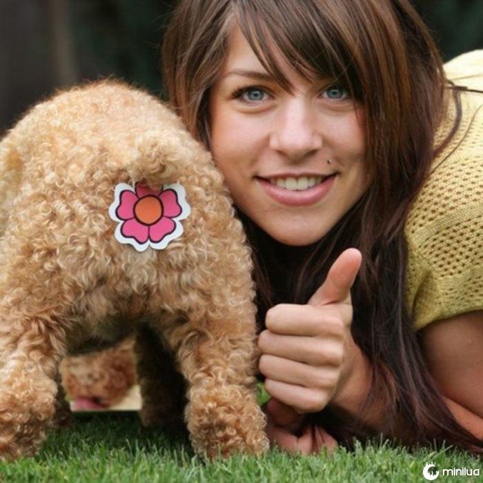 Cães Produtos - estampados na parte de trás do cão