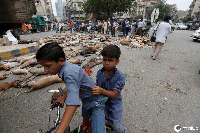 no Paquistão matam 700 cães 3