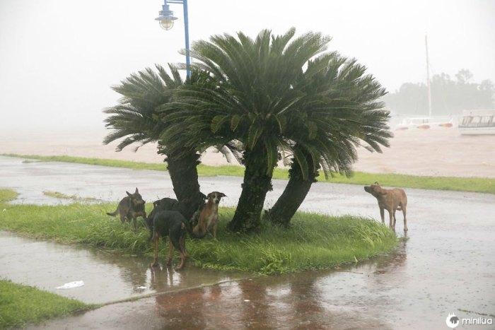 Cães tomam refúgio da chuva quando o furacão Irma faz sua entrada em Samana, República Dominicana, na quinta-feira