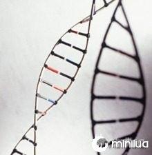 DNA-g-20100519