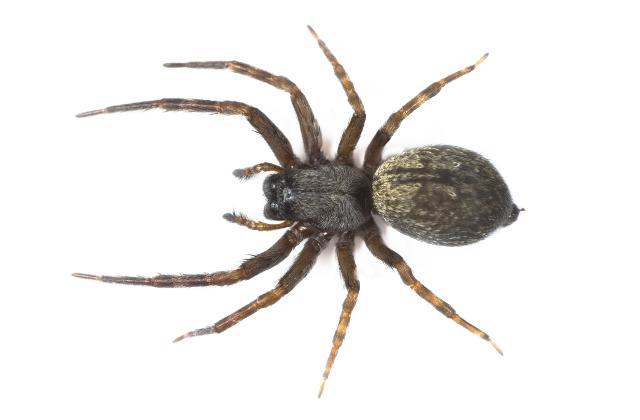 Uma aranha na orelha