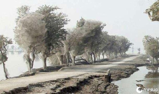 Árvores de teias
