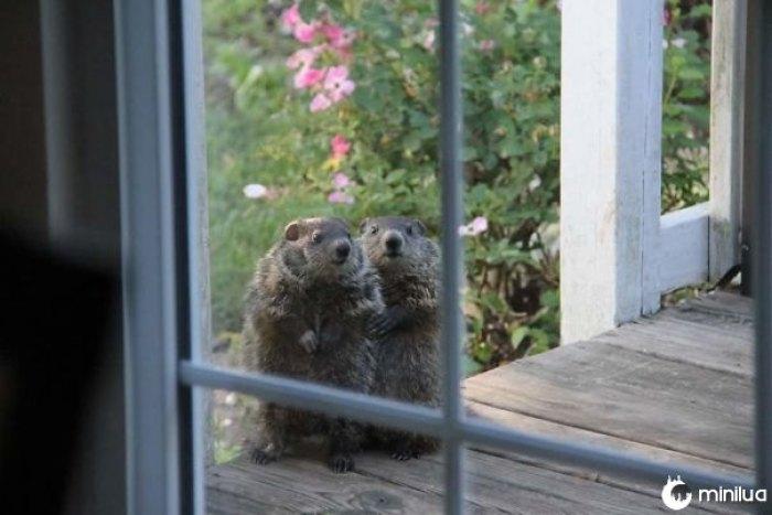 Minha tia obteve alguns novos vizinhos que vieram para se apresentar hoje.