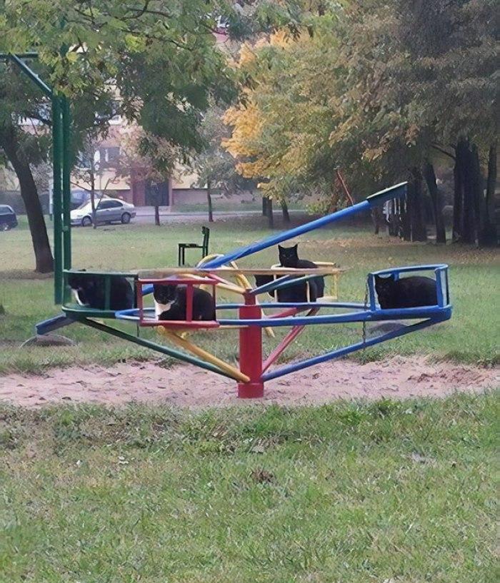 Eu ando pelo parque e, de repente, vi isso