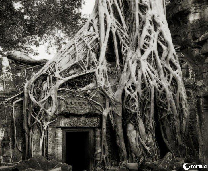 raiz cobre uma casa