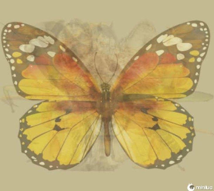 Que borboleta borboleta