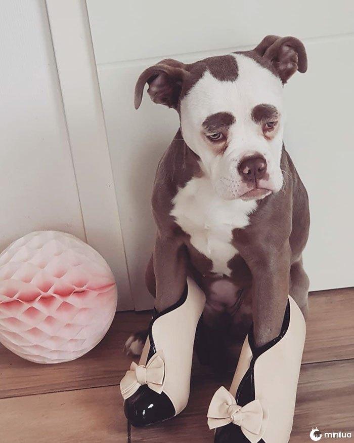 sad-dog-madame-sobrancelhas-inglês-bulldog-15