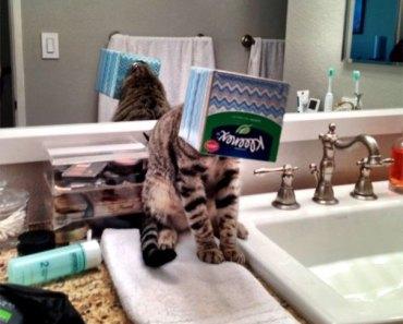 20 imagens de gatinhos agindo como idiotas que vão fazer você rir alto