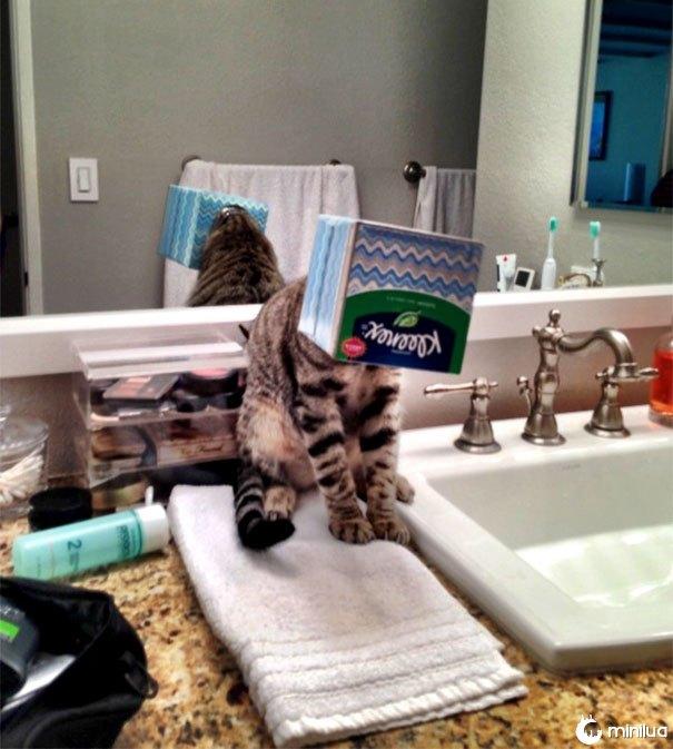 Eu ouço meu gato chorando no banheiro, entrando, eu vejo isso