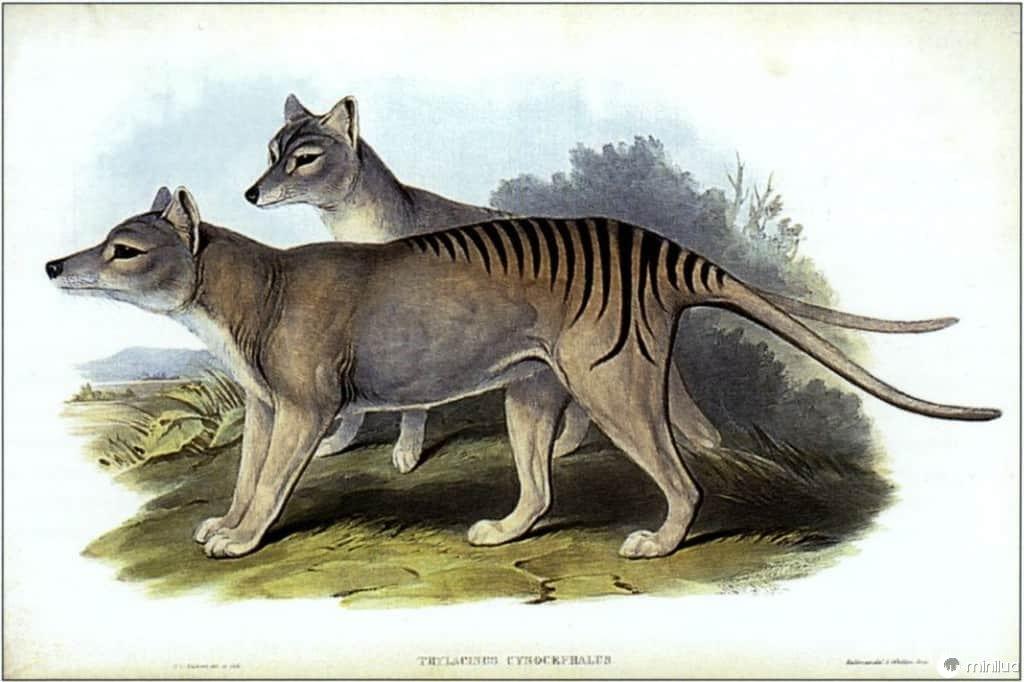 14 animais extintos que poderíamos clonar atualmente