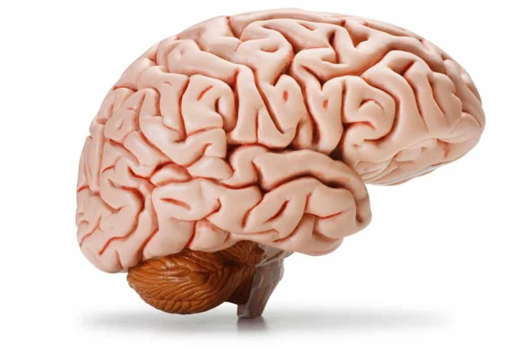 20 coisas que você provavelmente não sabia sobre o cérebro humano