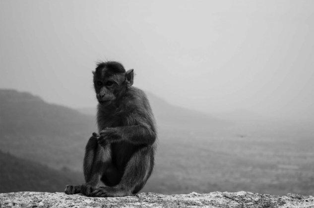 monkey mind