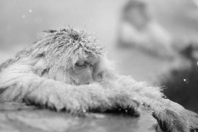 scimmietta in testa stanca di disturbarti