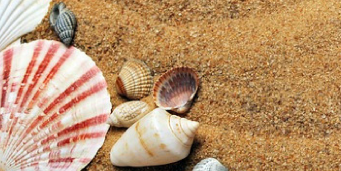 The Best Books on Seashell Crafts