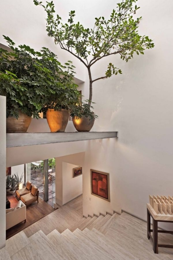 The benefits of indoor plants - Why are they so important ...