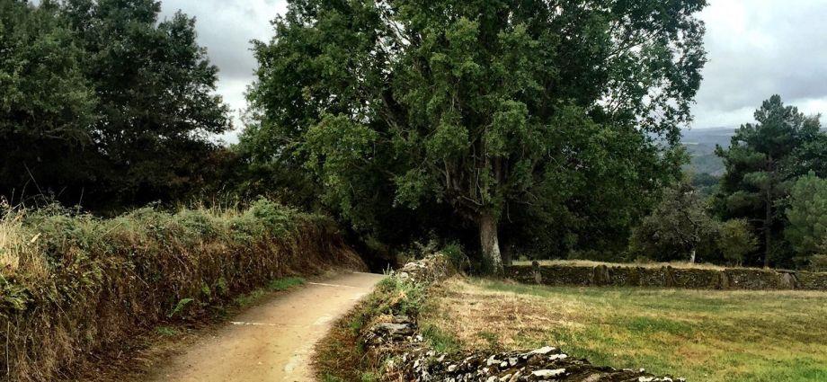 Waldweg auf dem französischen Jakobsweg in Spanien