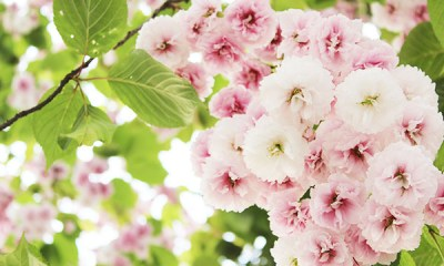 lente dingen om te doen met kinderen voorjaar