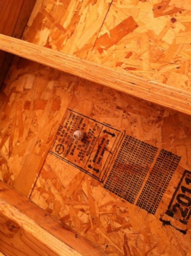 We had a few old bug nests up in the roof space, I expected more honestly, it was a nice open cavity...