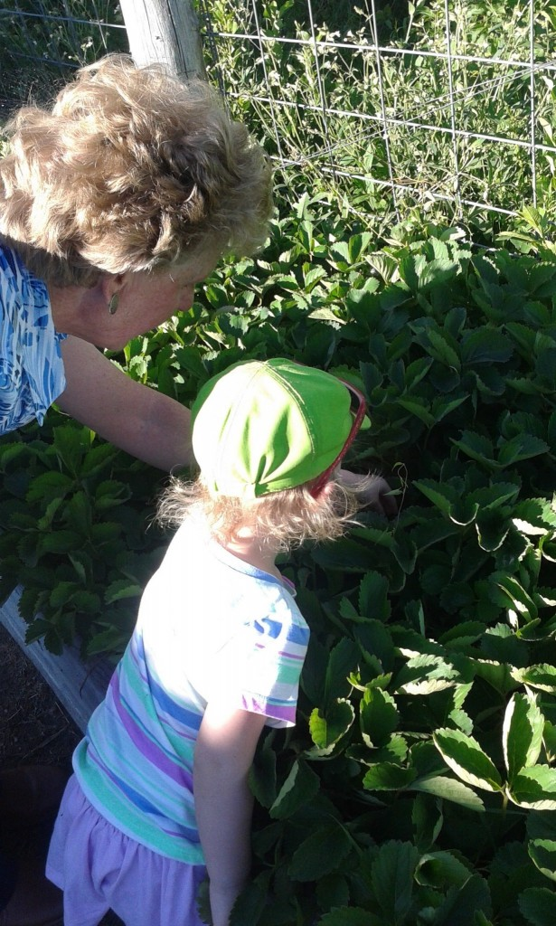 Hunting Strawberries with Auntie