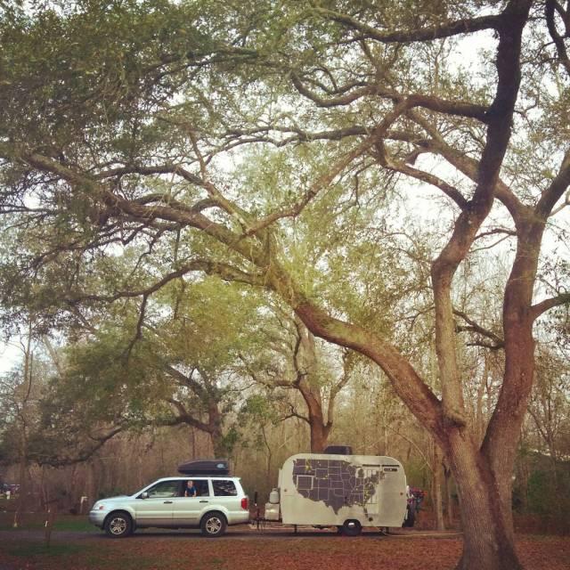 Big ole oak trees!