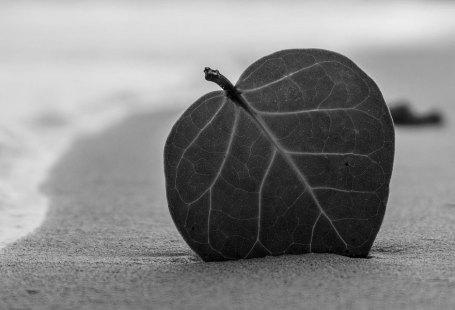 Viver na simplicidade é... # 1