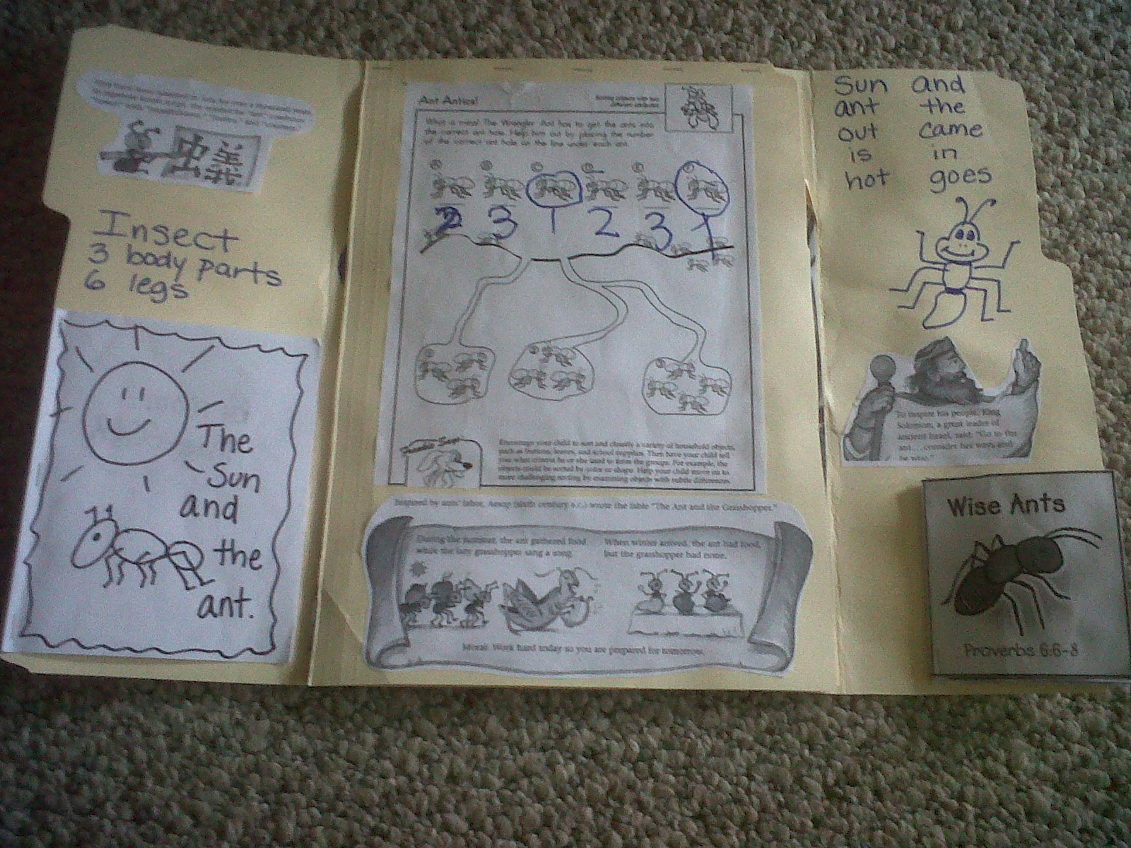 Ant Lapbook Unit Study