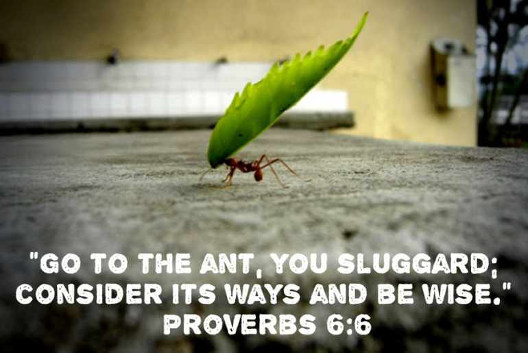 """""""Go to the ant, you sluggard;  consider its ways and be wise.""""  Proverbs 6:6"""