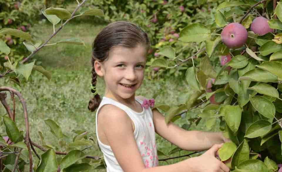 """""""Producing Fruit"""" Lectionary Lesson"""