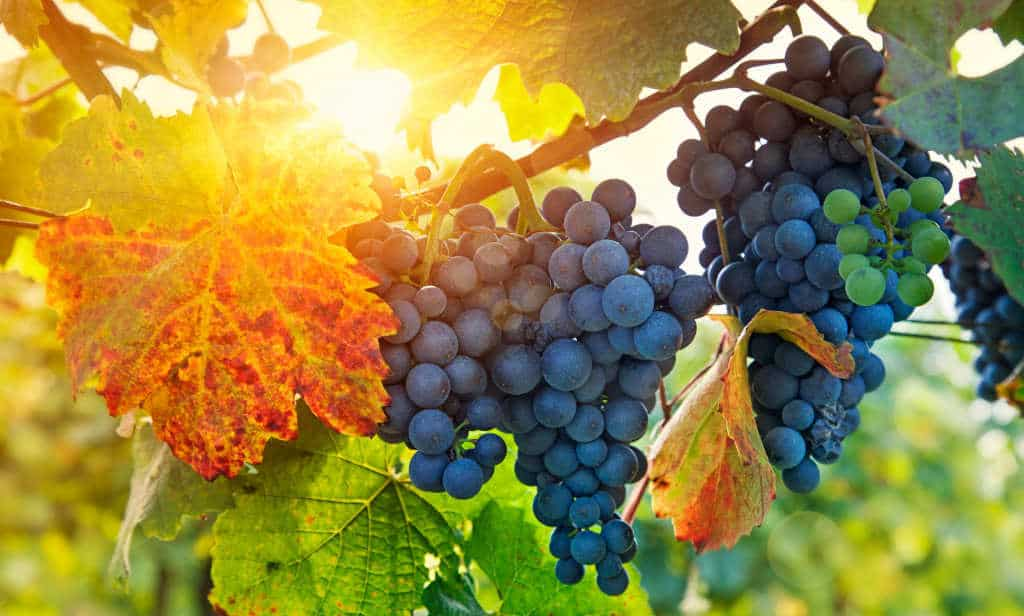 Vine and the Branches Object Lesson from John 15:1-8