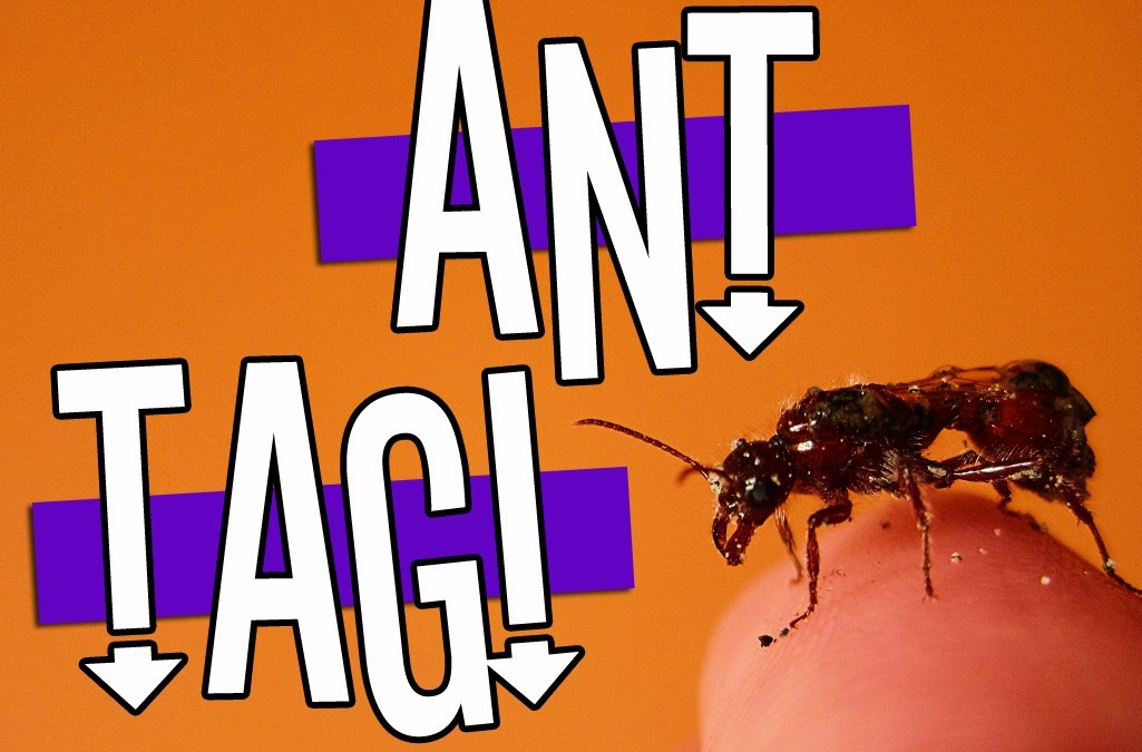'Ant Tag' Game