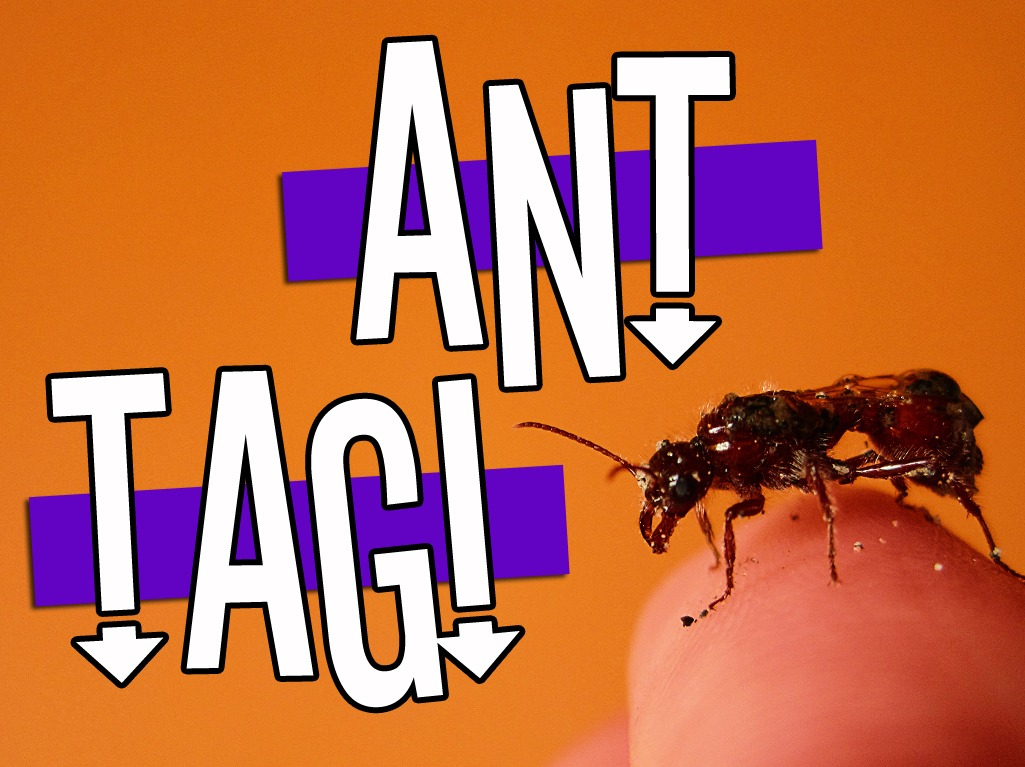 Ant Tag