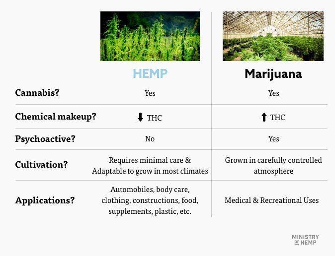 hemp vs marijuana comparison table