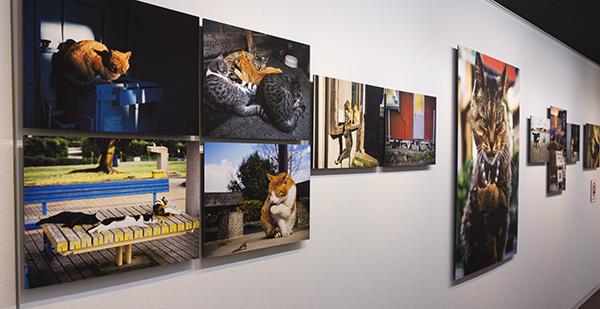 御木 茂則 写真展「希望の猫」