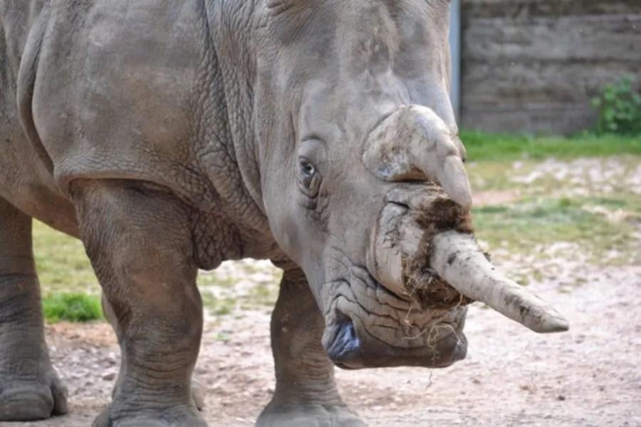 rhino marwell-wildlife-winchester-wildlife-everywhere-www.minitravellers.co.uk