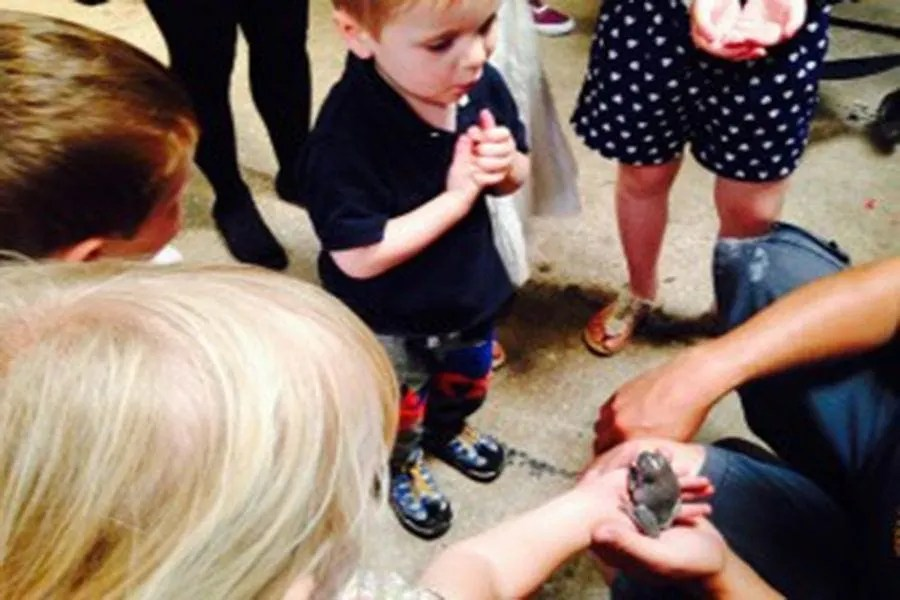 Meet the Bugs. Chance to stroke a lizard, a snake and hold a frog!!!