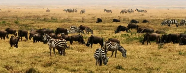 The Best Places to Spot Wildlife In Africa www.minitravellers.co.uk