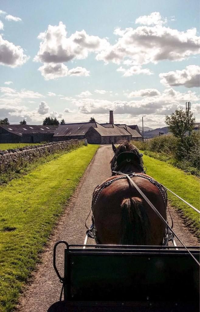 10 Things to do in Northumberland with Kids