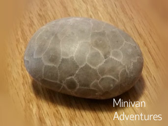 Petoskey Stone after sanding and polishing