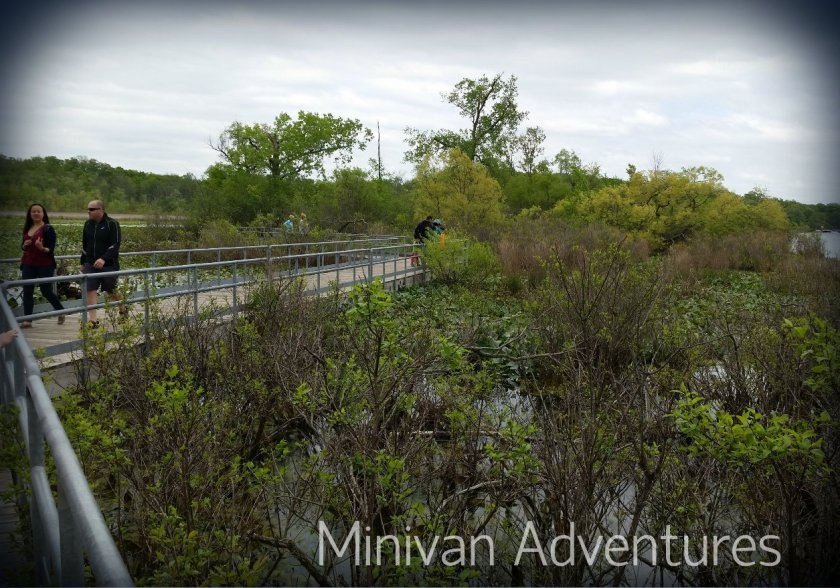 There is so much to see from the boardwalks floating atop Reeds Lake.