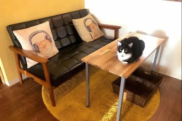 セイブ キャット カフェ (SAVE CAT CAFE)