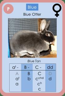 Blue-D-04