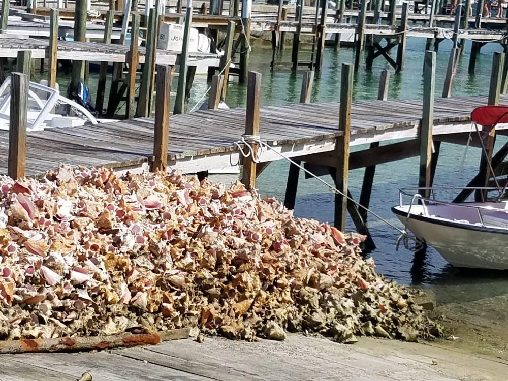 Conch shells in man o war 62317