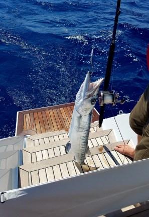 72117 doug catch 2nd barracuda 4