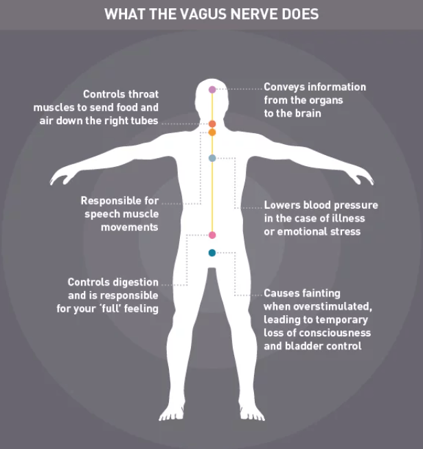 vagus nerve functions