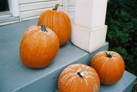 Pumpkins Pumpkins and More Pumpkins