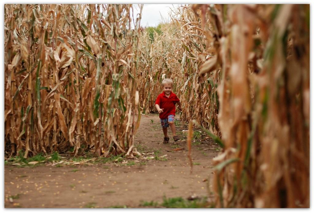 corn-maze-i